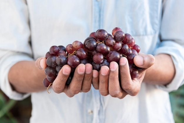 Мужчина держит в руках красный виноград