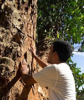 Мужчина держит ствол большого дерева в солнечный день