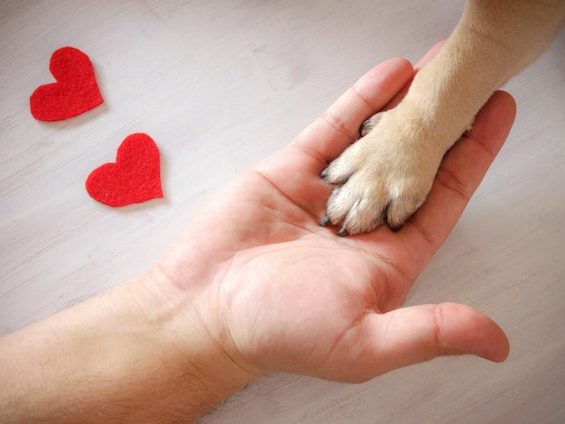 Man holds the dog's paw with love. red hearts on white background