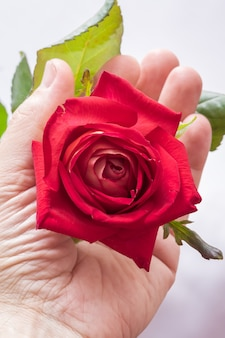 A man holds a red rose in his hand, a symbol of love. a man gives a flower
