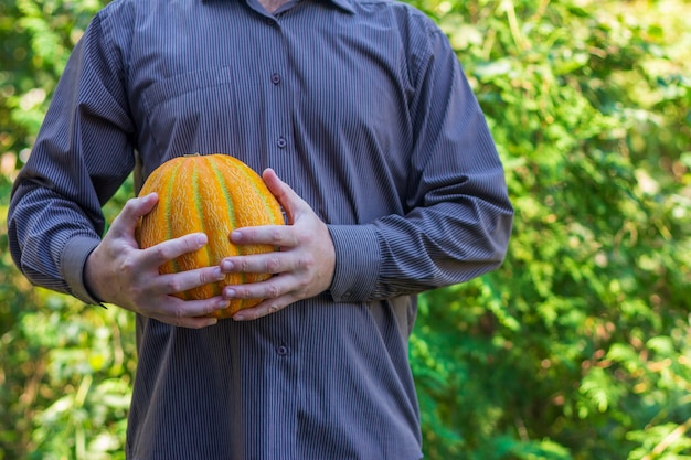 Man holds a ripe yellow melon in his hands