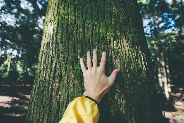 Man hugging tree bark