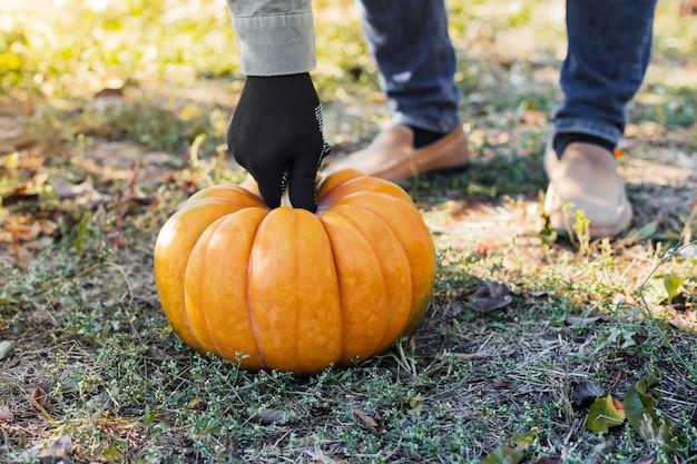 장갑에 남자는 가을 수확 시간에 일몰 필드에 노란색 호박을 보유하고 있습니다. 호박 패치.