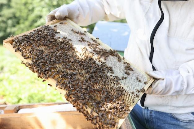 보호복을 입은 남자는 꿀벌 농장 개념에서 꿀벌을 검사하는 벌집 양봉가와 함께 일합니다.