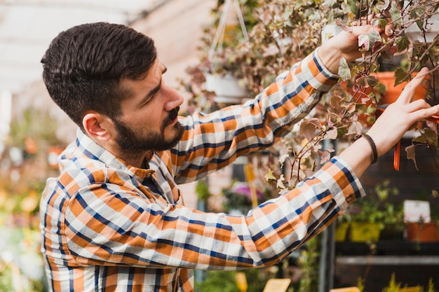 Man inspecting flowers in greenhouse