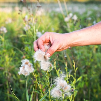 Man is gathering cotton in the field. hands holding plant. fashion industry consumerism. low paid slave work. harmful trends for environment.