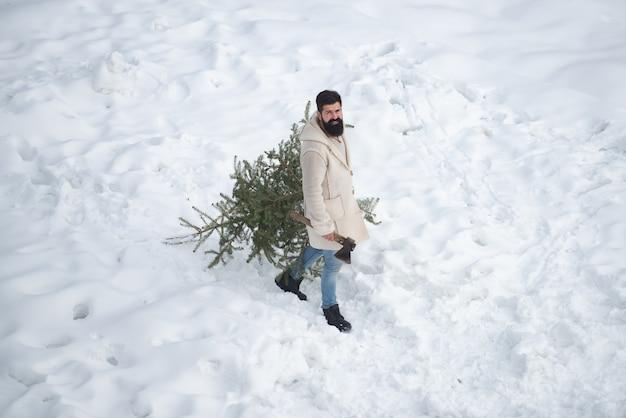 男はクリスマスツリーを切るつもりです。ひげを生やした男は森の中でクリスマスツリーを運んでいます。テーマ