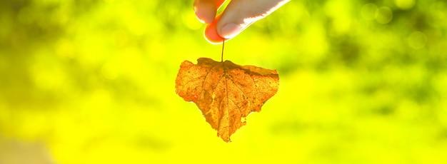 男は乾燥した葉を持っています。秋の季節。小春日和。