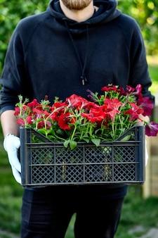 男はバスケットを運ぶ園芸用品センターでペチュニアの花を買い物しています。