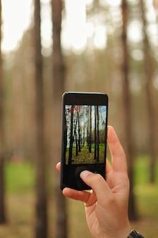 남자는 스마트폰으로 숲 속의 소나무 사진을 찍고 있다. 아마추어 사진가