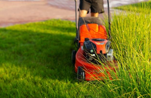 男は夜明けの朝に芝刈り機で芝生を刈ります。