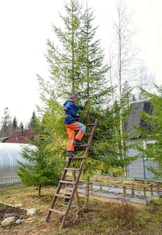 木から枝を鋸で切るはしごの上の男