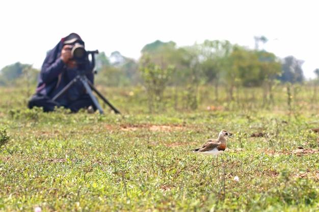 Man photographer taking bird photo at the grass field