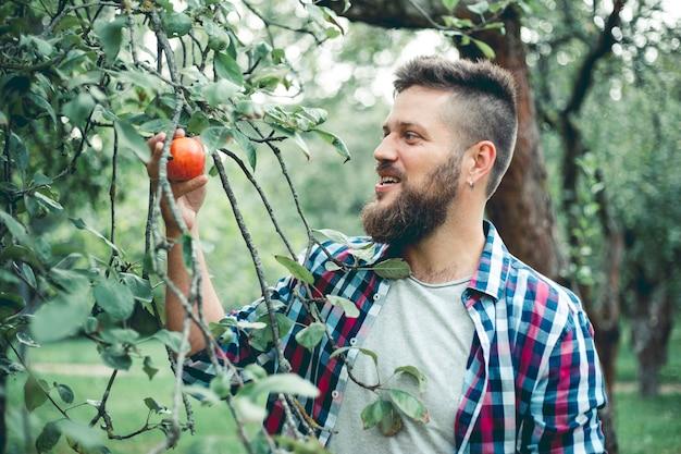 Человек срывает яблоко с дерева