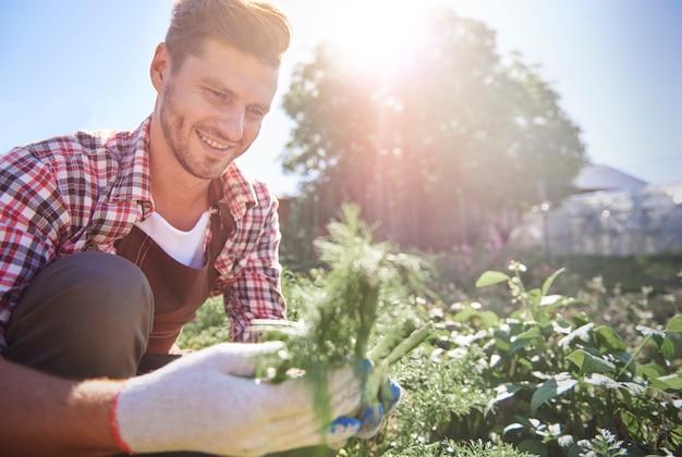 Uomo che prende la carota organica direttamente dal campo