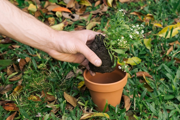 Man planting green plant with soil in pot