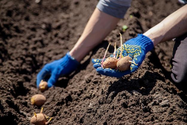 地面にジャガイモを植える男