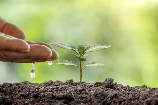 녹색 배경 세계 환경의 날 개념에 씨앗을 심고 작은 식물을 급수하는 사람.