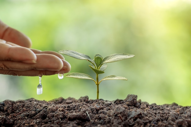 Man planting seeds and watering small plants on green background world environment day concept.