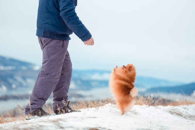 A man playing with a dog breed spitz red on the mountain in winter.