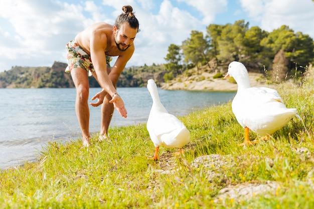 Человек играет с гусями на берегу