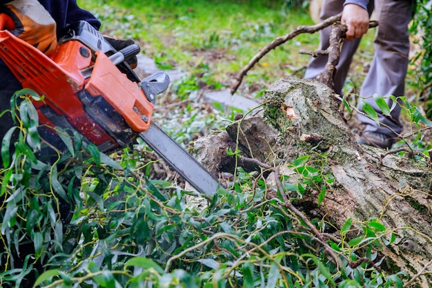 Man pruning tree branches work in the city utilities after a hurricane storm damage trees after a storm