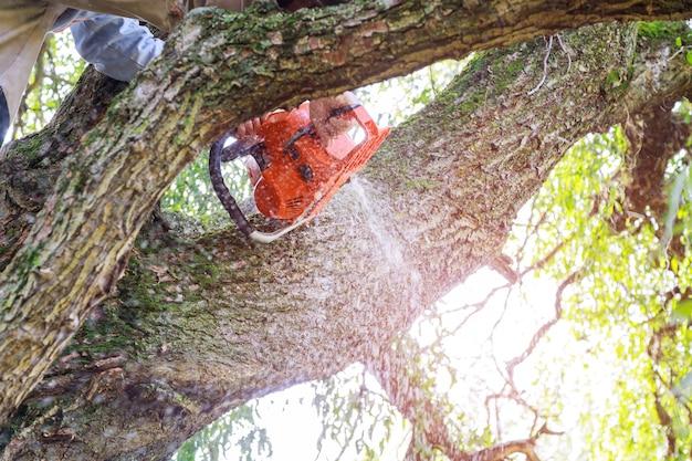 ハリケーンの嵐が嵐の後に木に損害を与えた後、木の枝を剪定する人は都市のユーティリティで働きます