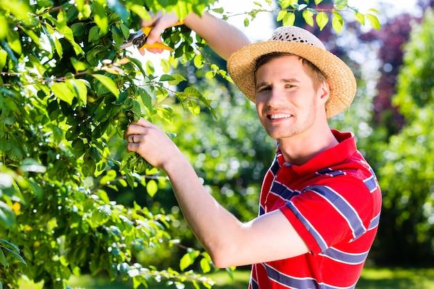 果樹園の庭で木を剪定する男