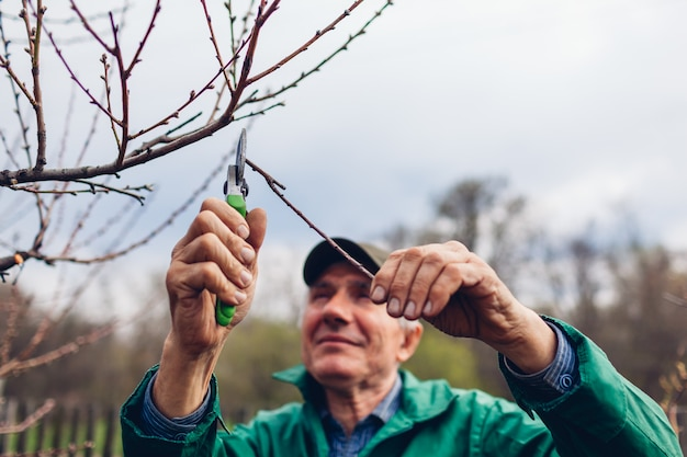 Man pruning tree with clippers. male farmer cuts branches in autumn garden with pruning shears or secateurs