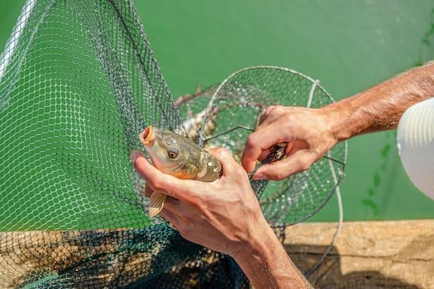 Мужчина вытаскивает зеркального карпа из рыболовной клетки. концепция спортивной рыбалки.
