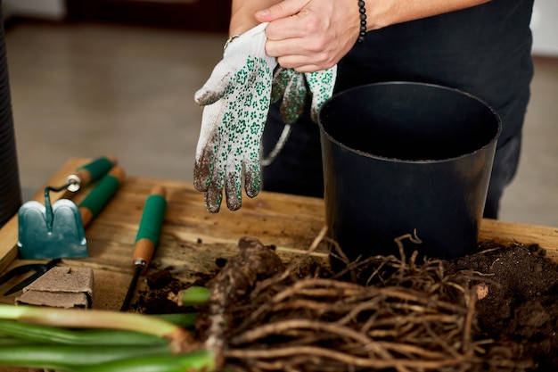 男は木製のテーブルの黒い鍋の近くに手袋をはめ、屋内植物、趣味やレジャー、家庭菜園を移植します。