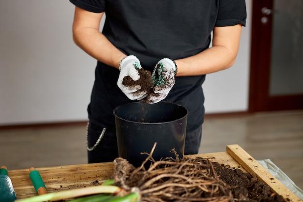 男は木のテーブルの黒い鍋に土を置き、屋内植物、趣味やレジャー、家庭菜園を移植します。