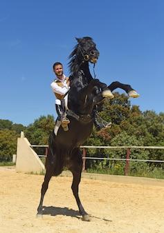 Man and rearing stallion
