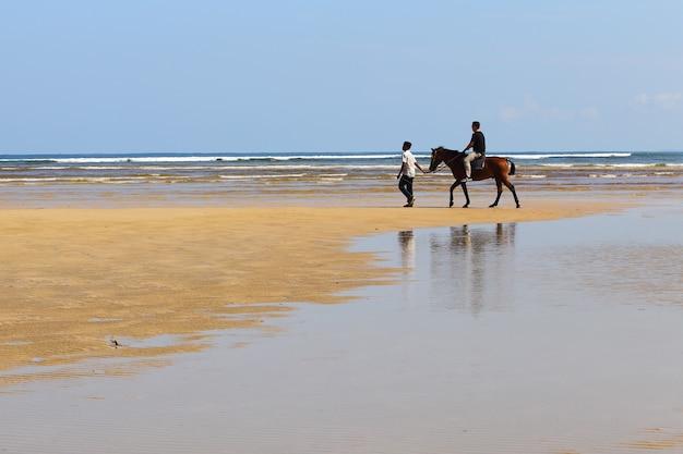 ビーチの海の波と馬のフィーダーで馬に乗る男は砂浜に対してずっと世話をします
