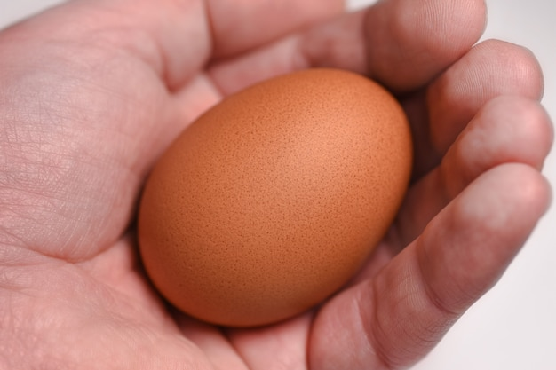 A man's hand holds an egg. the origin of life