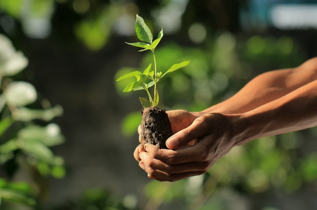 The man's hand holds the seedlings as a form of greening concern