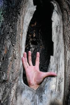 남자의 손은 오래된 나무의 움푹 들어간 곳에서 튀어나옵니다. 도움을 요청하는 개념, 환경 문제