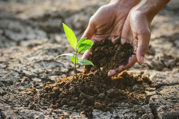 The man's hand was planting the seedlings in the dry soil.
