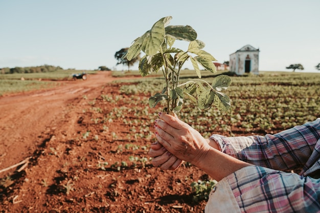 The man's hands hold a small seedling of coffee
