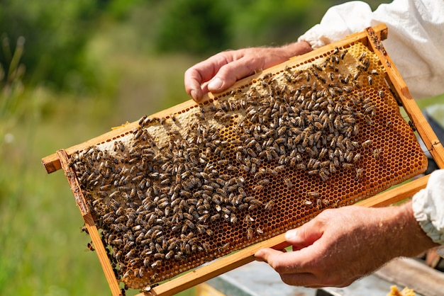 Man's hands hold a wooden frame with honeycombs and bees in the garden in the summer.