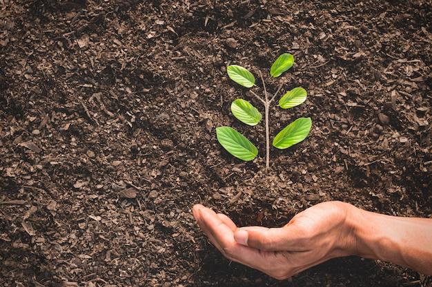 사람의 손은 지구 온난화 개념의 땅에 작은 나무를 둘러싸고 있습니다.