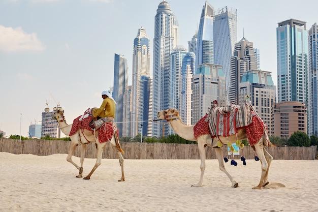 Man sits on a camel on the beach in dubai
