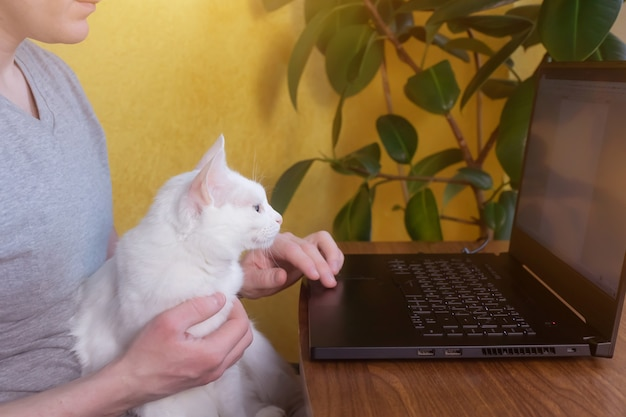 A man sits at a table with a white cat in his lap. in front of him is a table with a laptop