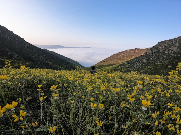 Man sitting on flower landscape of a mountainous valley