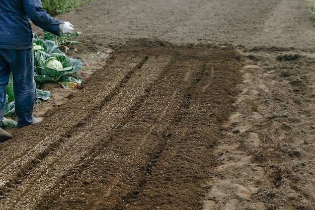 男は庭でライ麦を種をまく