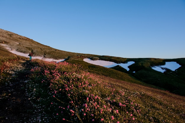 Man standing on the hill field in the foreground of pink flowers on the background of the mountain with snow remnants