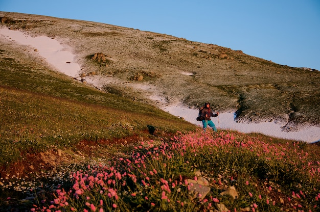 Man standing on the hill field with hiking backpack and sticks in the foreground of pink flowers