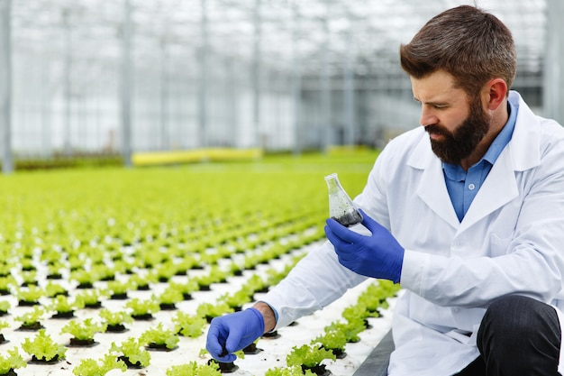 Man takes a probe of greenery in an erlenmeyer flask standing in the greenhouse