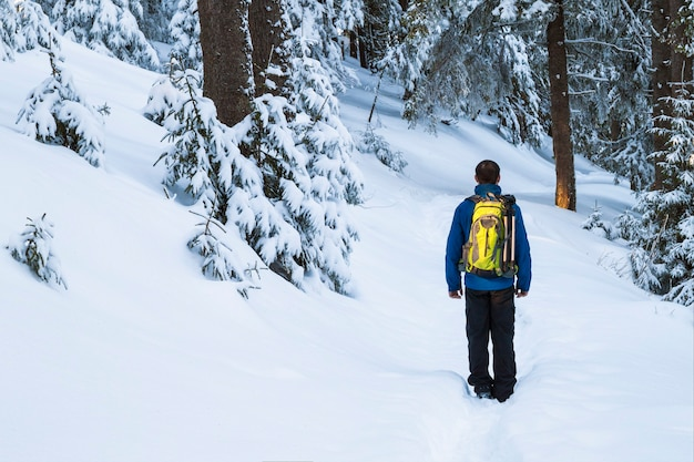 Man tourist hiker in snow covered winter pine forest