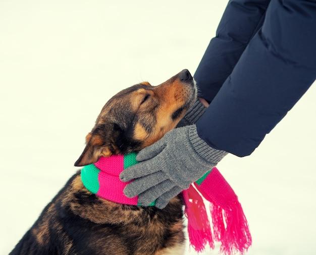 Человек, завязывающий шарф собаке в холодную зиму